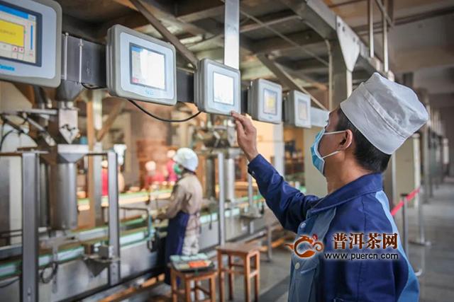 勐海茶厂复工13天,巴达、布朗基地春茶采收有序进行