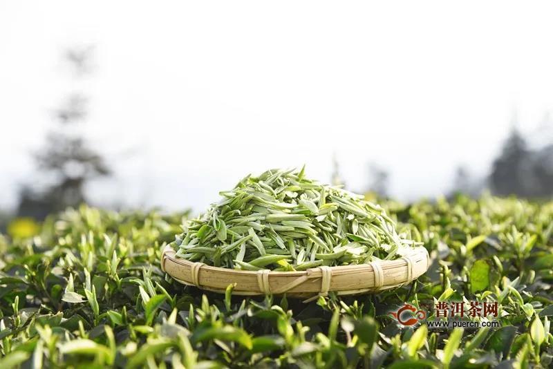川红正式开采2020首批开园茶