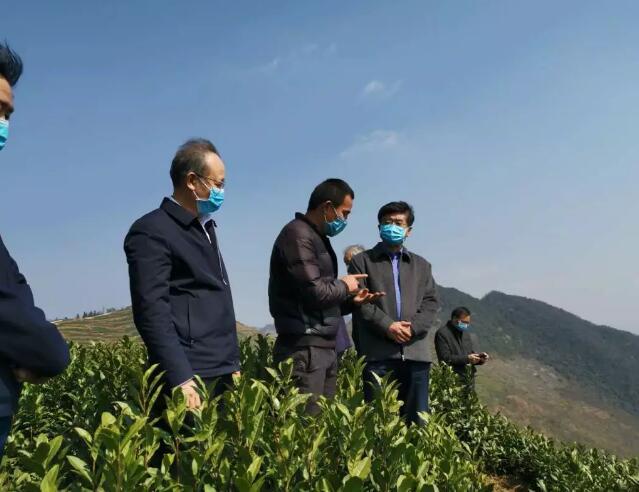 慕德贵赴普定县调研茶产业及疫情防控情况
