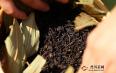 湖南黑茶的市场价格