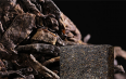 黑茶最早起源,有三种说法!