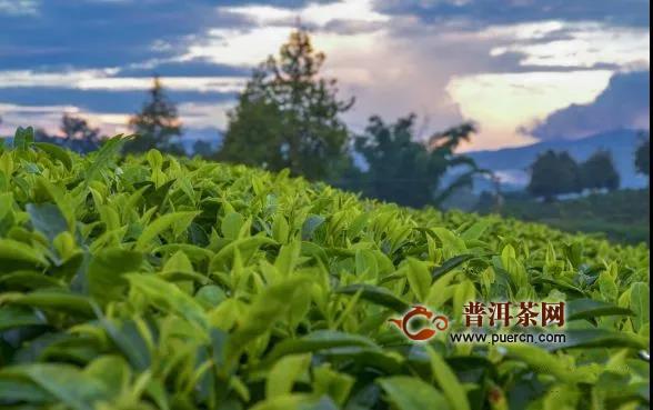 早春绿茶一般什么时候上市