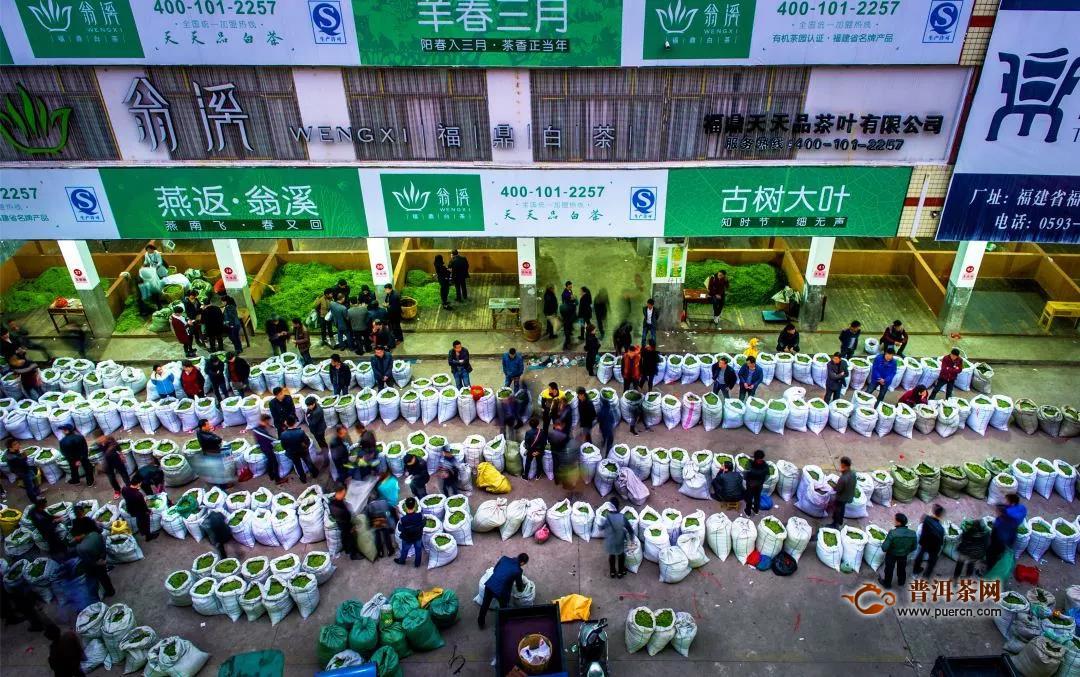第九届福鼎白茶开茶节将于3月29日在点头镇大坪村开幕