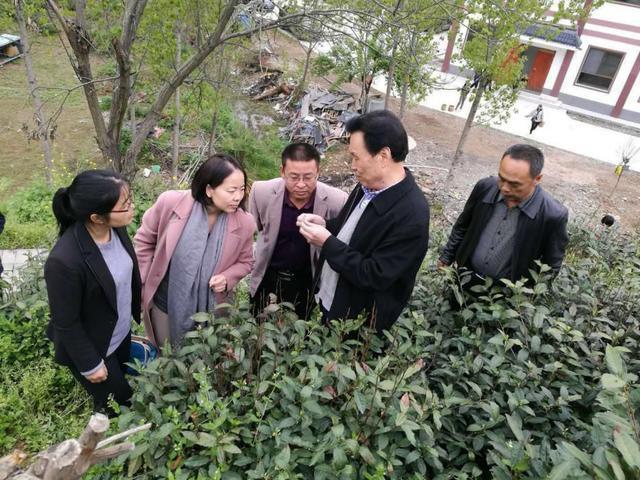 疫情下,一份来自陕西茶产业破局调研报告