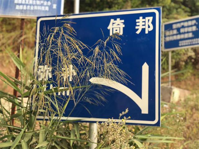 陈玉侯在勐腊县调研茶产业复工复产时强调