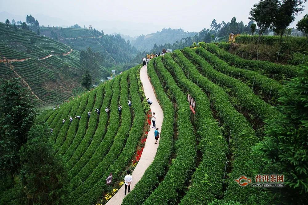 当代著名茶学家陈椽与蒙顶山茶的故事