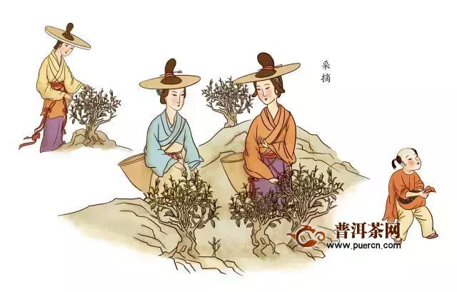 祁门红茶传统手工制作流程图(全流程)