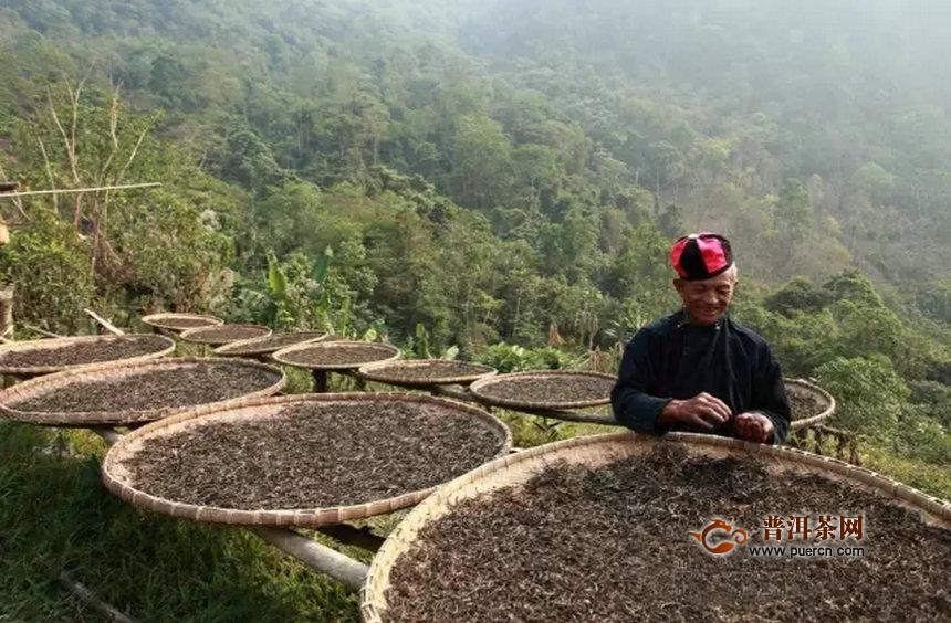 云南最全茶山汇总,要找的普洱茶山头大全都在这里了!