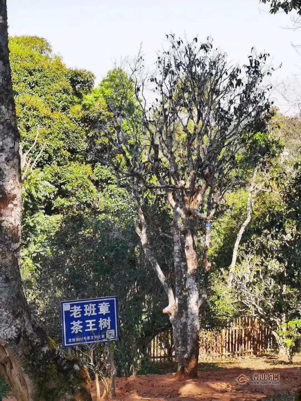 云南又是干旱年,普洱春茶减产注定价格会大幅回落吗?