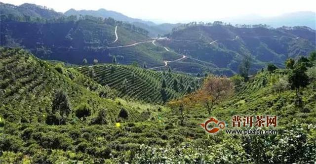 广西梧州:流行后茶味依然浓烈