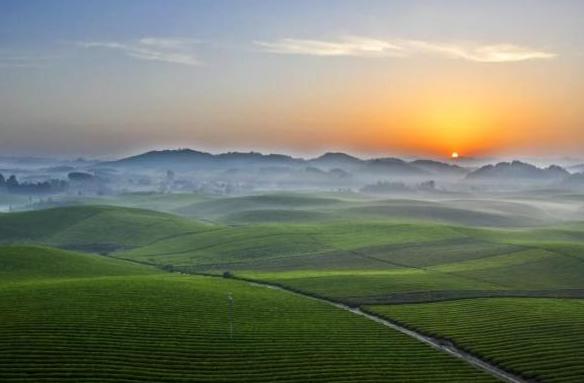 江苏溧阳千亩茶园 中国茶叶年产量有多少?