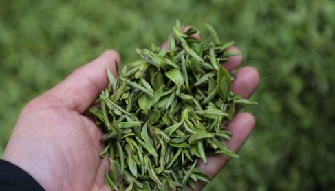 """中国茶叶流通协会倡议:援助湖北解决早茶""""卖茶难"""""""