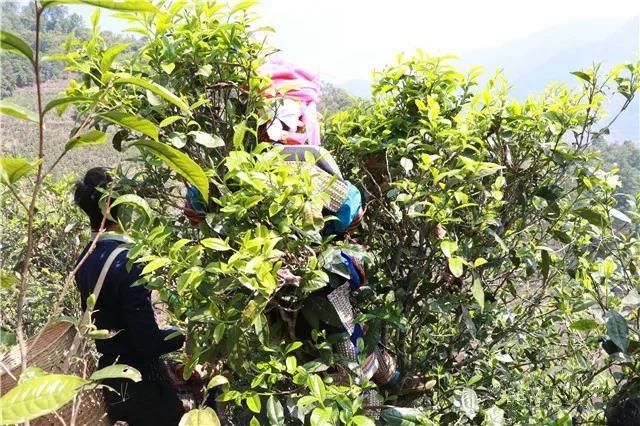 【原创】疫后茶行业会发生价格战,还是终端战?