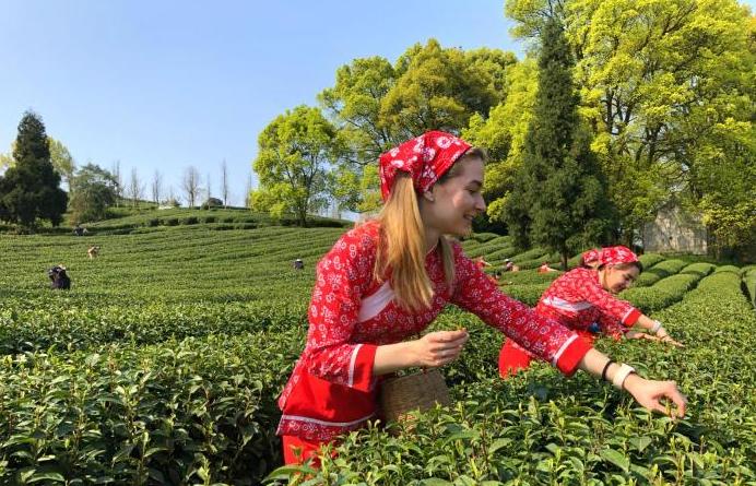 """""""洋弟子""""重庆学制茶传播中国茶故事"""
