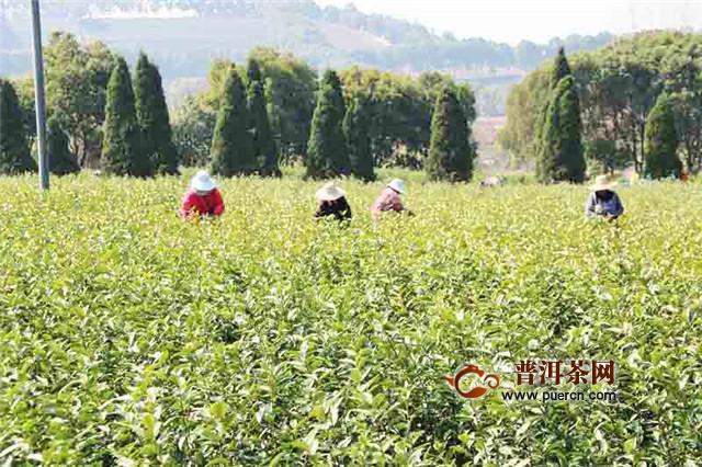 山西深挖中药材资源 打造中国第七大茶系