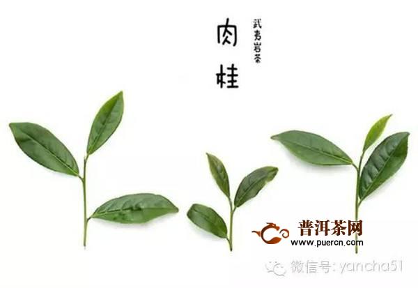 武夷岩茶茶名命名方法