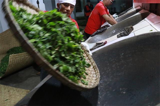 普洱茶传统制作工艺