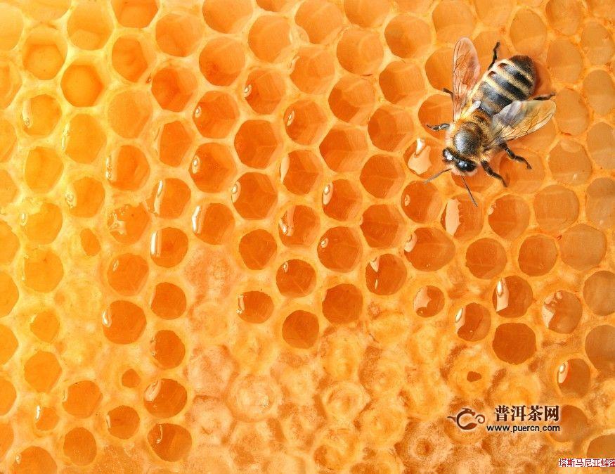 蜂蜜绿茶能减肥吗