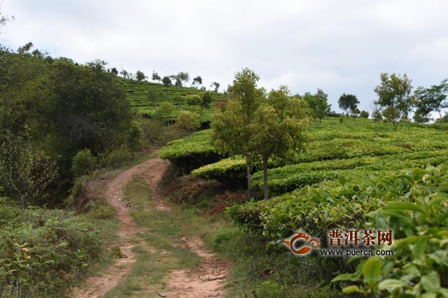 国内茶叶去年销售额达2739.5亿元,绿茶占比过半