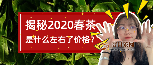 洪普号茶事:2020年的春茶,是什么左右了普洱茶的价格?