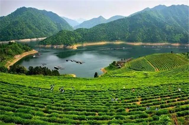 """""""安化黑茶""""新增3个省级地方标准"""