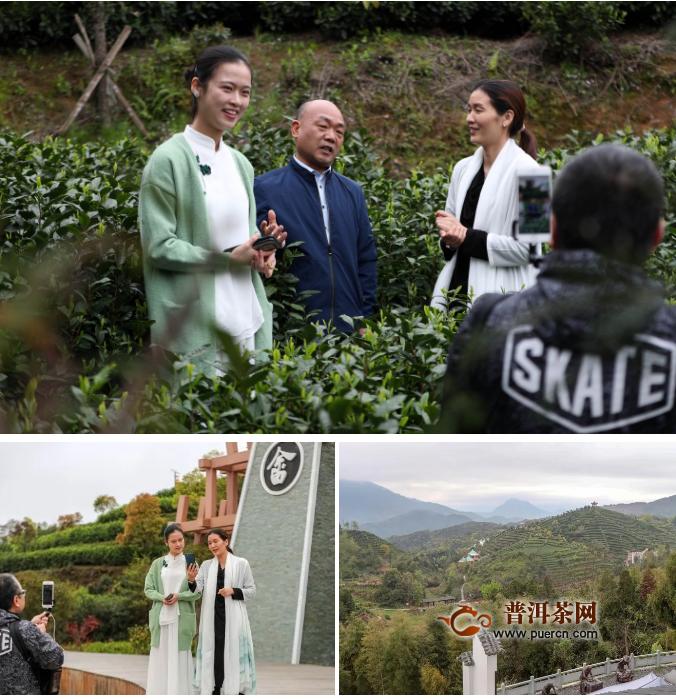 温州早茶品牌展启幕,首站7.5万人云上逛茶展!