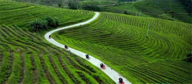 """这家公司的有机茶获欧盟和中国有机食品""""双重认证"""""""
