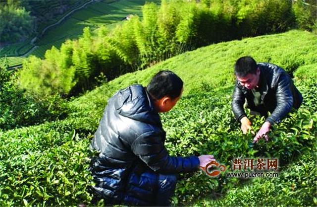 淘宝春茶节即将盛大开幕,爱茶之人有口福了