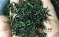 冻顶乌龙属于绿茶还是乌龙茶