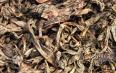 漳平水仙茶是水仙茶,属于乌龙茶不属于绿茶