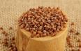 黑苦荞麦的功效与作用