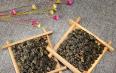铁观音是什么茶是红茶是绿茶
