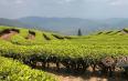 """""""国家现代农业产业园创建""""对思茅茶产业的推动"""