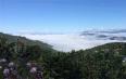 你想知道的勐海茶山的知识点都在这里
