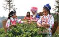 阳春三月好风光,鸟王山上采茶忙!