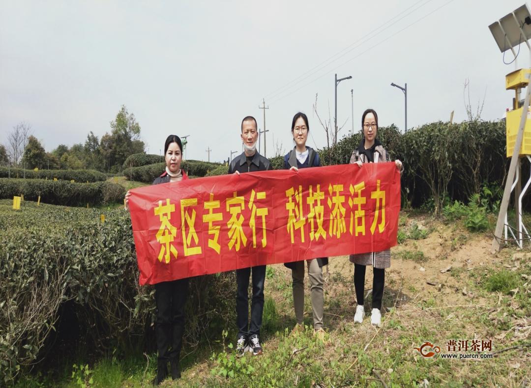 省农业农村厅推广研究员一行调研指导福鼎现代茶叶产业技术体系工作