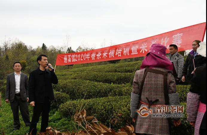 """铜仁缠溪镇举办首届""""双手采茶节"""""""