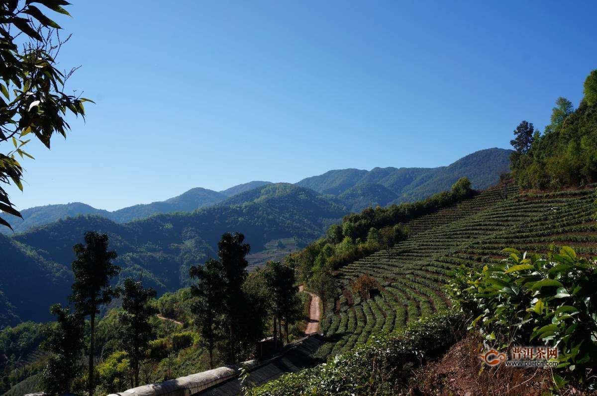 """云南宁洱:""""普洱山·普洱茶""""品牌推动茶叶产业发展"""