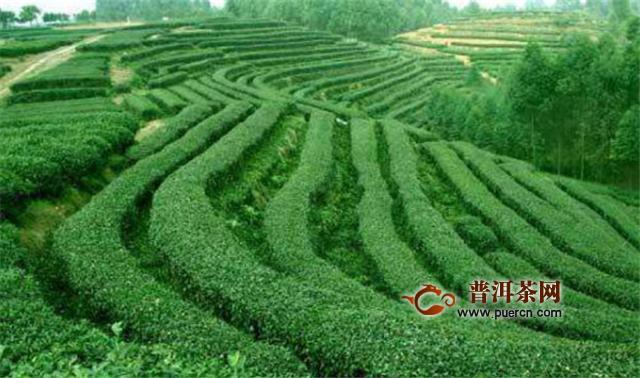 四川的茶文化圣地:蒙顶山和他的茶文化