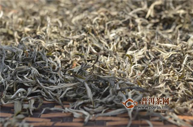 石雨益昌号:春茶季在石雨的贺开古茶园中采茶…