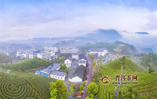摄影师镜头下的中国茶园美得不像话