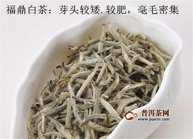 福鼎白茶属于红茶吗