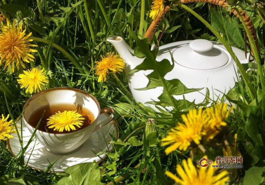 蒲公英红茶的功效与作用及禁忌