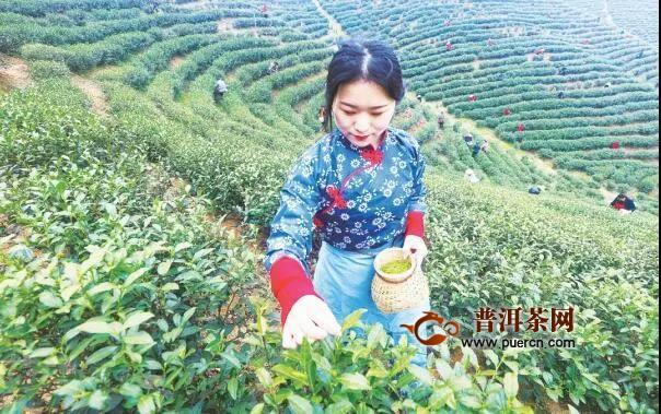 2020春茶市场正在复苏,盘点各茶叶名区复工盛况!