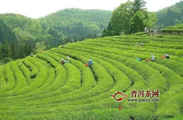 茶乡古丈打造茶旅融合新地标