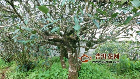 景谷傣族彝族自治县云春茶厂