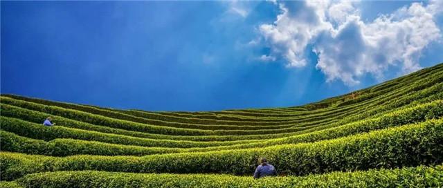 农业农村部办公厅关于做好首个国际茶日有关工作的通知