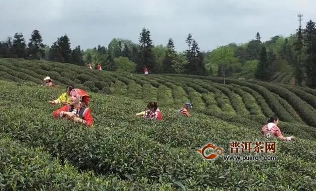 老包说茶:云茶向非品饮类产品的开发转型