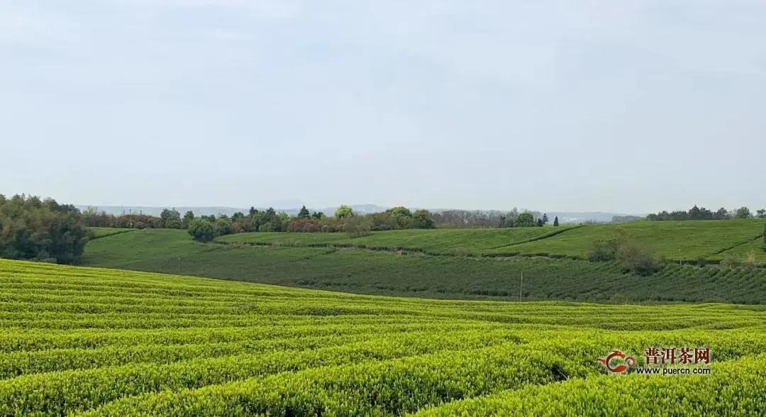 2020中国茶叶大会暨第十四届新昌大佛龙井茶文化节开幕