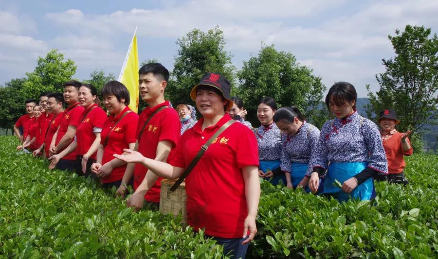 白沙溪茶厂举行2020年谷雨采茶节活动